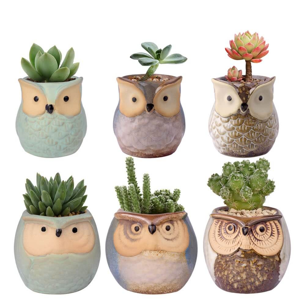 Gifts for Moms Who Have Everything - Mini Owl Succulent Planters