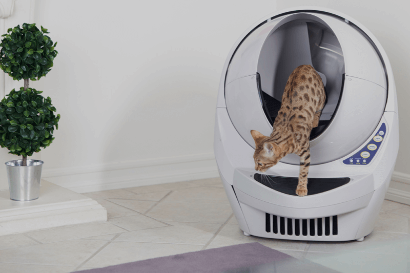 Girl Boss Giveaways - Enter for a chance to win a Litter Robot